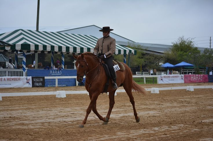 Joao Graca and Fuego DC Dressage Working Equitation