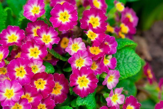 Perennial Flowers for Utah Climates
