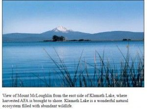 Klamath Lake where AFA is harvested