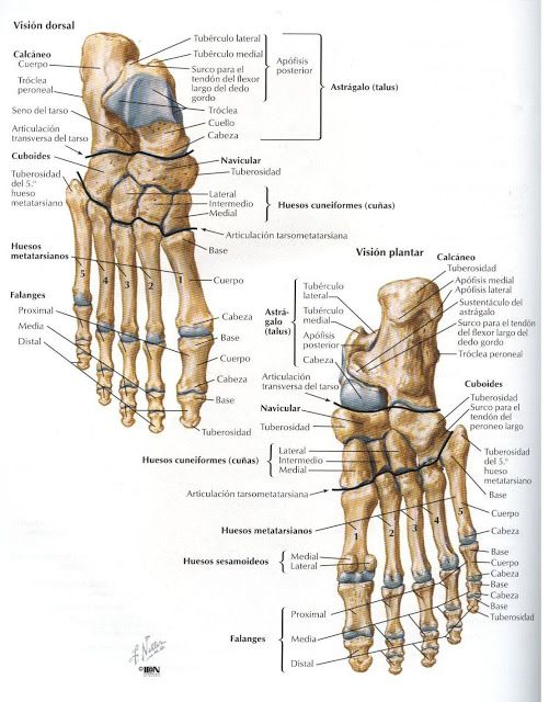 9 best anatomia : esqueleto humano images on Pinterest | Esqueleto ...