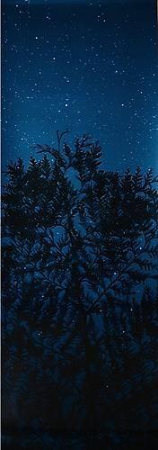 Star Field Cypress, 2003