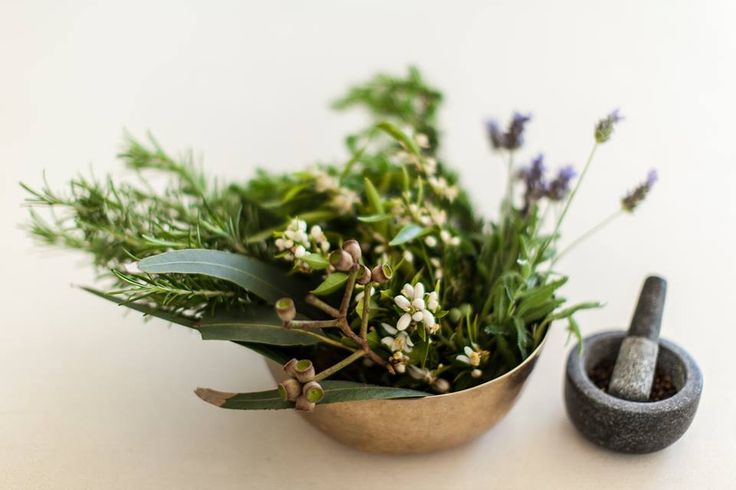 Botanicals in our scent 2