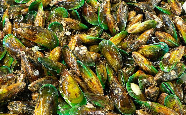 ETA an essential fatty acid found in green lipped mussels. The pool is overflowing with them.