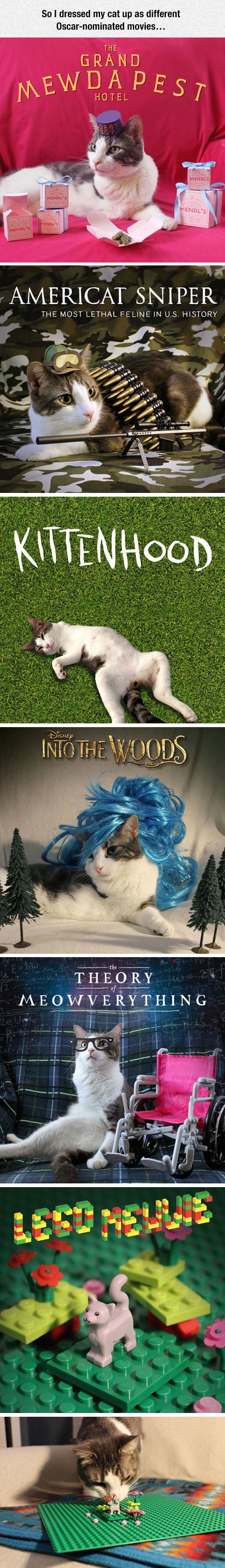 Oscar-Nominated Movies With Cats