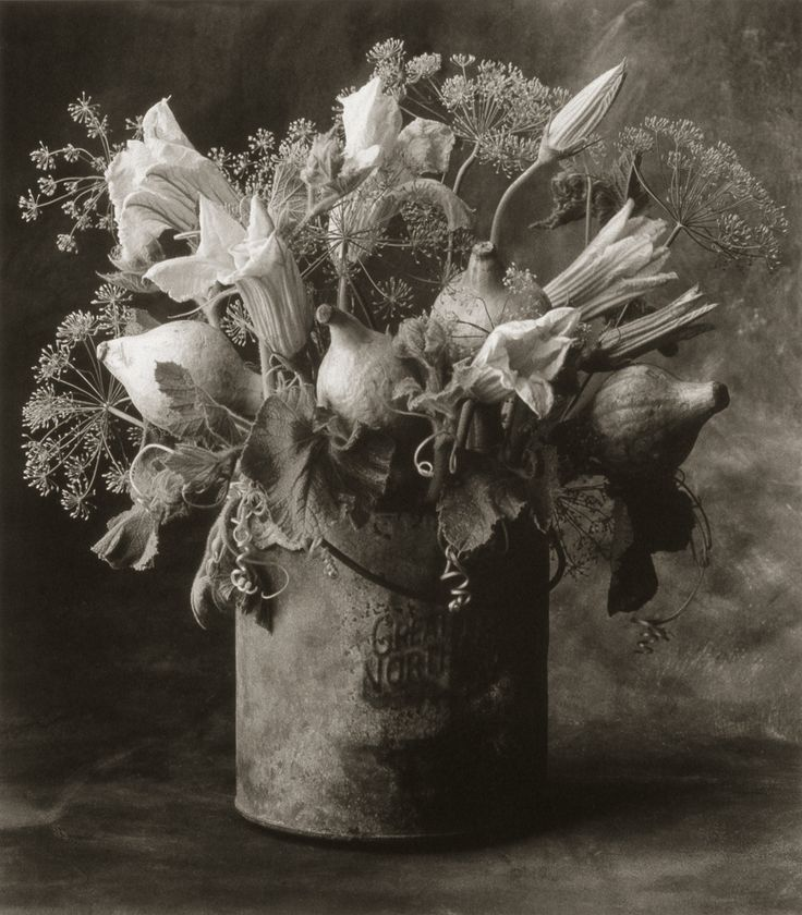Squash Flowers and Dill ©Cy DeCosse Fine Art Photography. The Beauty of Food Collection. Limited edition platinum-palladium print. CyDeCosse.com #photography #art #food