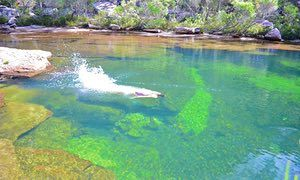 kangaroo creek