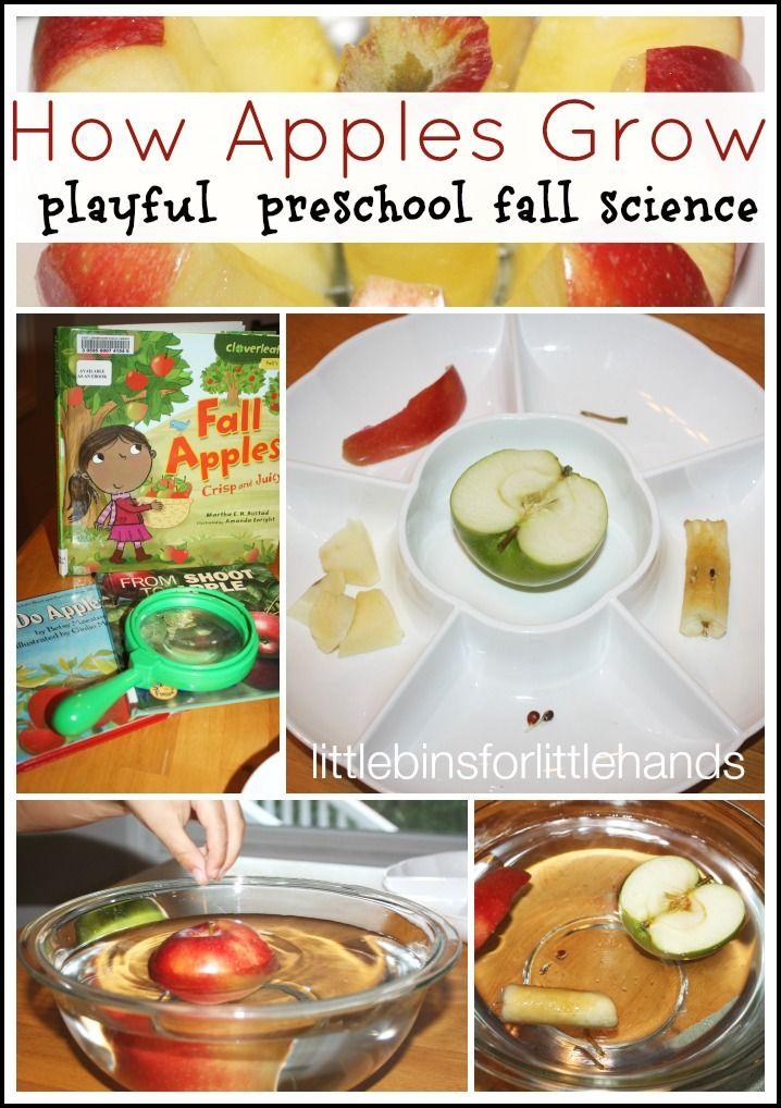 Apple Science Activity Preschool Theme For Fall