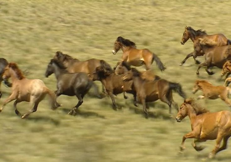 Australian high country mountains pics | Our beautiful Brumbies....
