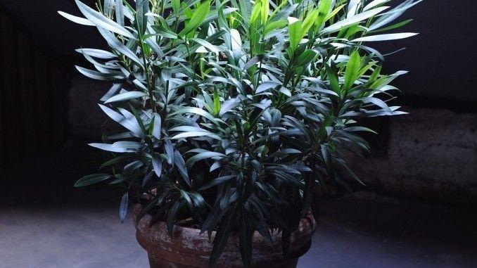 Die Pflanzen, die nicht winterhart sind, haben Sie jetzt vermutlich schon vor dem Frost in Sicherheit gebracht. Ideal ist dafür ein heller, aber kühler Raum. Draußen bleiben können dagegen alle winterharten Gewächse.
