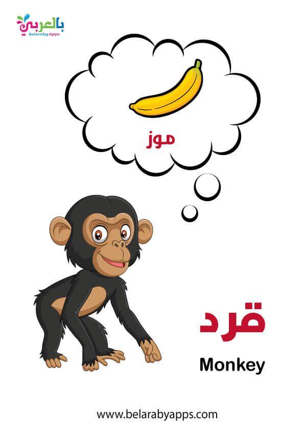 بطاقات أسماء حيوانات الغابة بالصور وحدة الحيوانات رياض اطفال بالعربي نتعلم In 2021 Flashcards Character Monkey