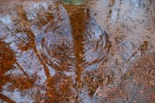 Tento 'Het bos heeft dorst' van 23 maart - 2 september 2012.