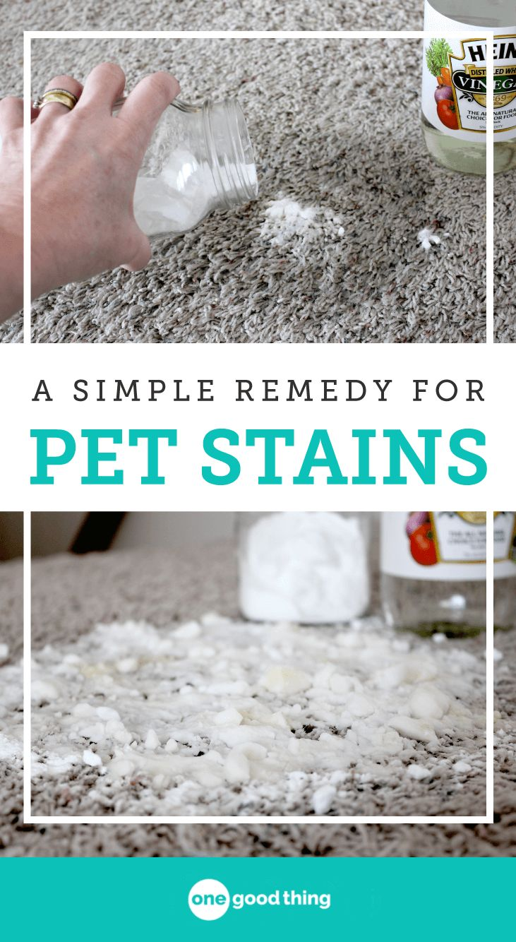 This simple remedy for pet stains contains two natural ingredients you already have in your kitchen and works as well as any store-bought product!