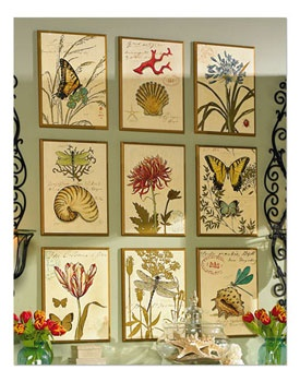 Botanical Wall Art 15 best sea corals images on pinterest | coral, coral print and