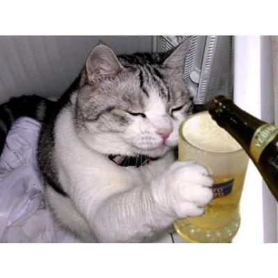 Imagini pentru poze haioase cu pisici