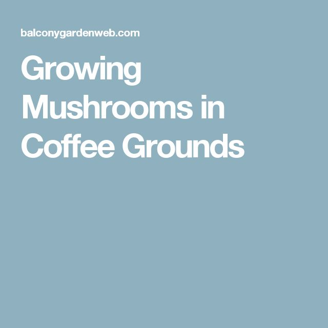 how to grow mushrooms in used coffee grounds