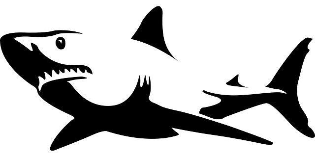 Que es un Tiburon?