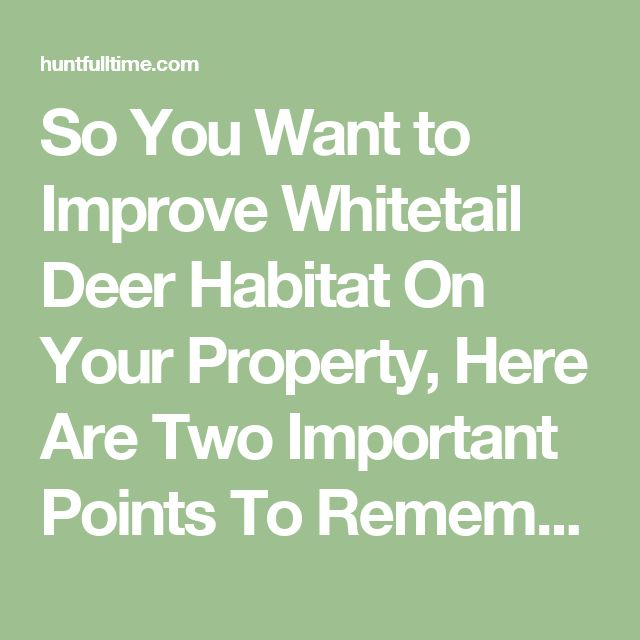 So You Want to Improve Whitetail Deer Habitat On Your Property, Here Are Two Important Points To Remember | Hunt Full Time