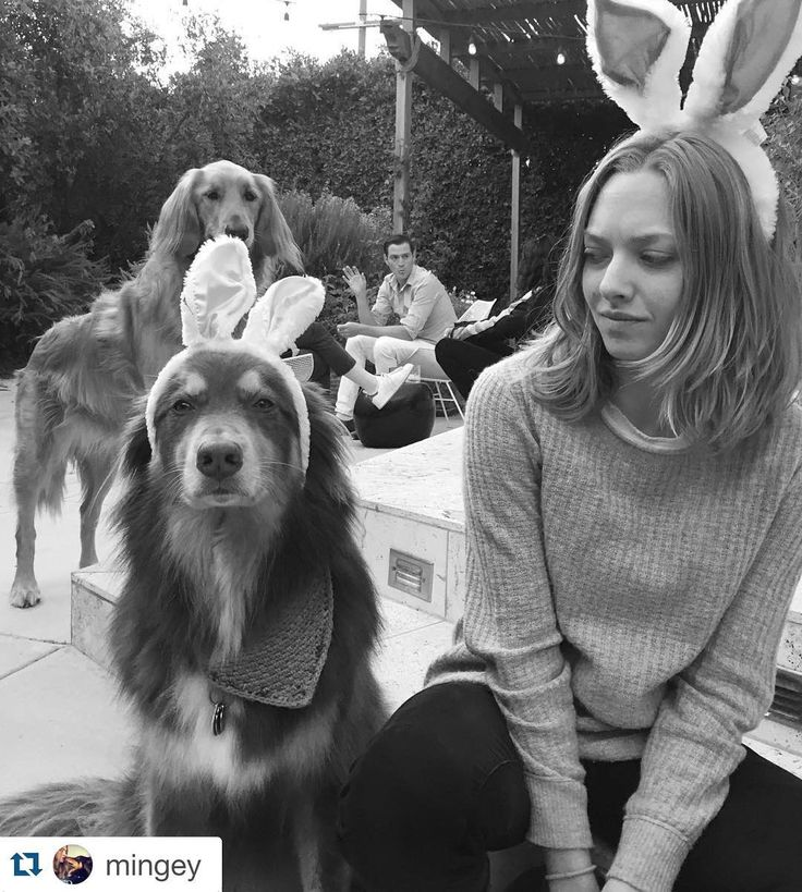 . There's a 30% chance that Amanda Seyfried and her dog Finn are already Easter bunnies. (: Instagram) by eonline