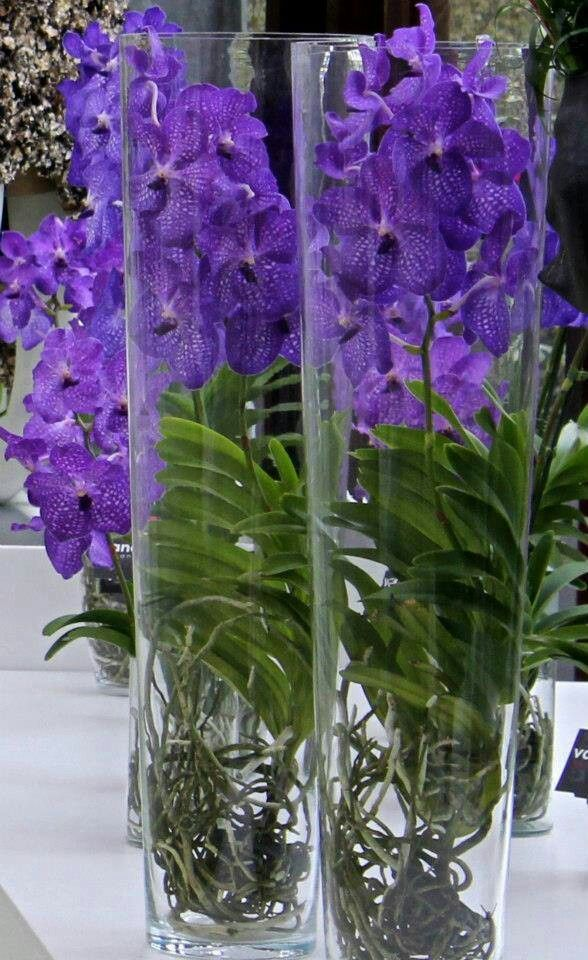 Vanda orchids in a glass vase