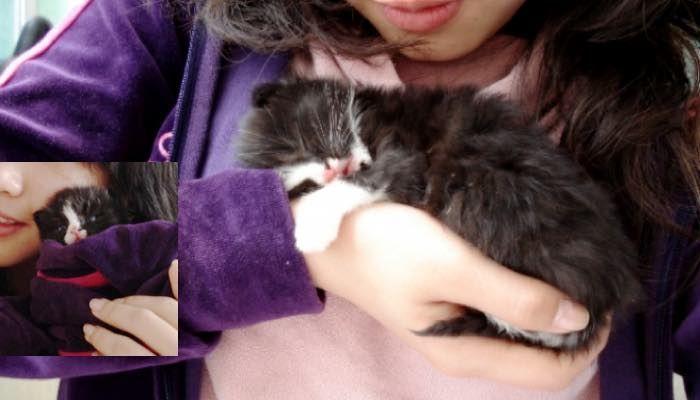 Tuxedo Kitten Holds onto Rescuer and Won't Let Go - Love Meow