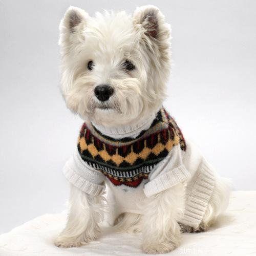 West Higland Terrier - Home | Facebook