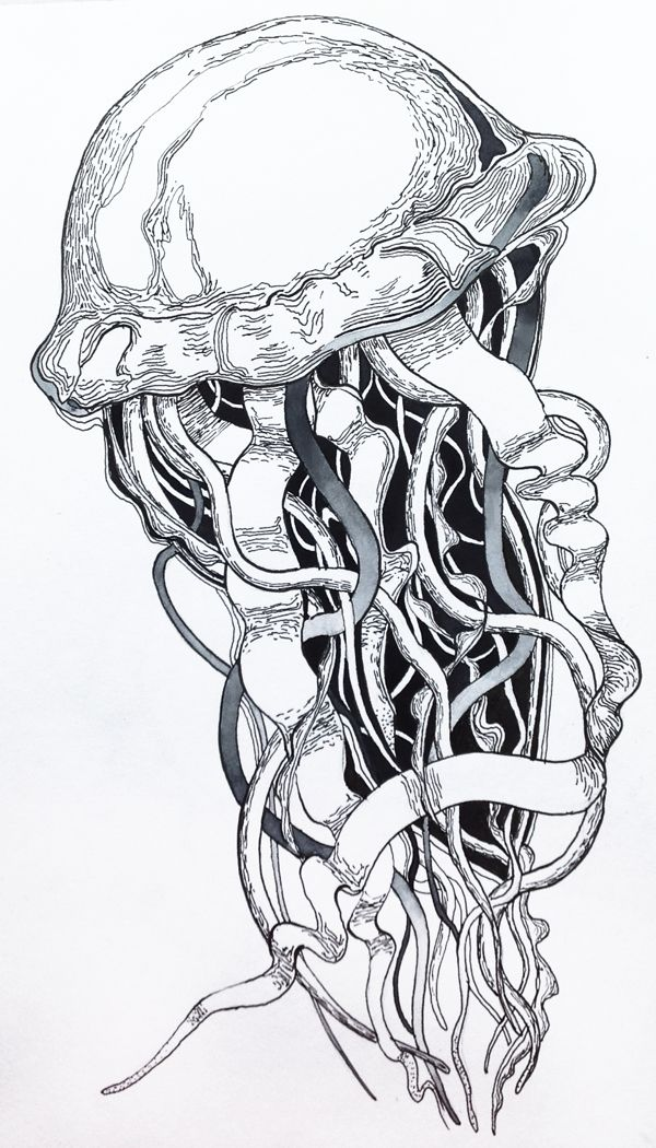 This is a graphic of Crush Jellyfish Ink Drawing