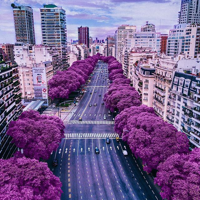 Buenos Aires , Argentina  This beautiful picture is by @alepetra_