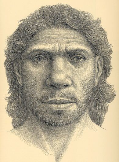 Homo heidelbergensis, artists rendering of an ancestors face, drawing