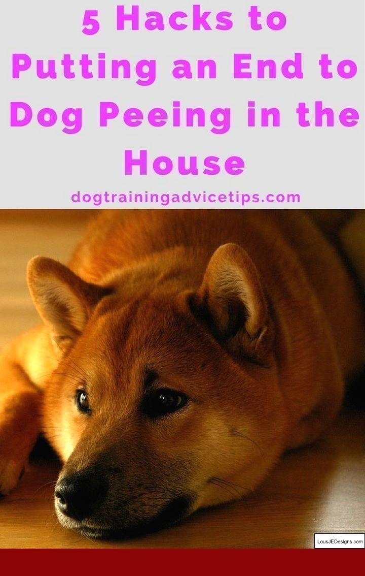 How To Train Your Dog To Walk Beside You Video And Pics Of How To