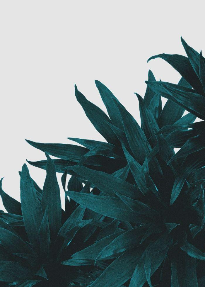 4577 best Flower & Plant images on Pinterest | Landscaping ...
