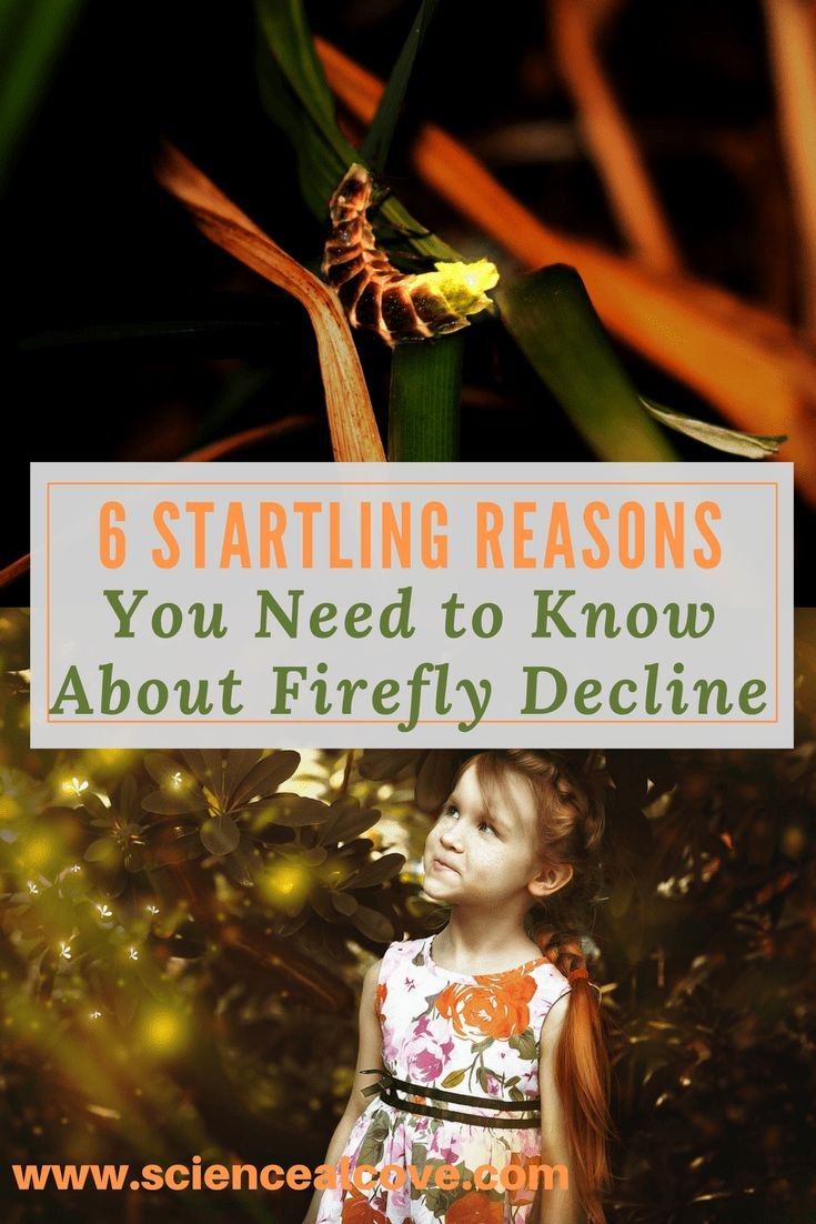 Surprisingly, firefly decline has been noticed in North America. There are 6 important reasons why and some practical things we can all do to help. #fireflies #bug #jar #facts #forkids #bioluminescence #creatures