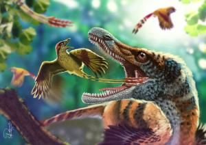 Smuk forhistorisk fugl fundet i Brasilien | Videnskab.dk