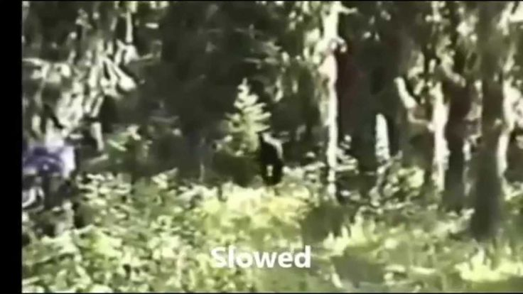 A Close Look: Blue Mountains Paul Freeman Bigfoot Footage