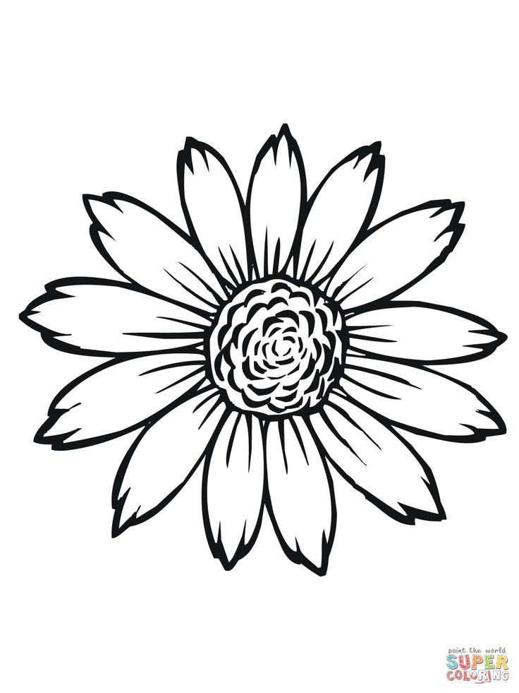 Sunflower Flower Coloring Pages