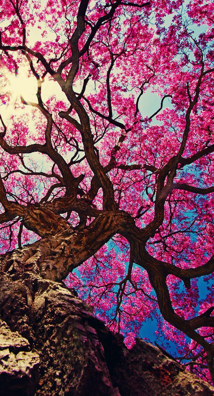 Pink tree iPhone wallpaper