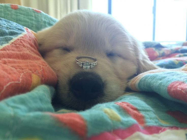 8 Best Puppy Love Images On Pinterest Proposal Ideas Puppy