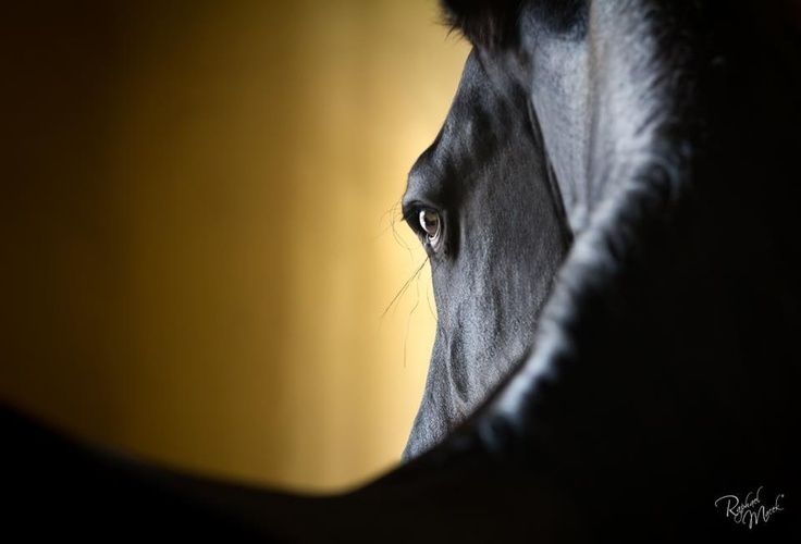 outstanding horse pictures to share | Beautiful horse - Raphael Macek - Photography | Outstanding Horses