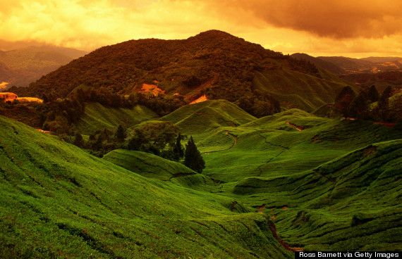 6. Cameron Highlands, Malaysia 19 Under-The-Radar Places In Southeast Asia That Will Actually Change Your Life