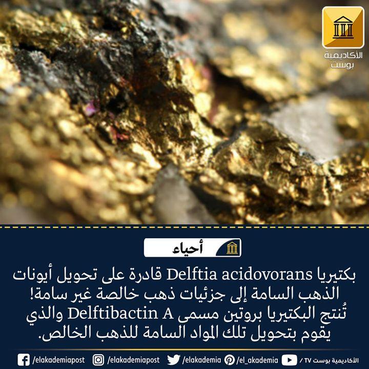 بكتيريا Delftia Acidovorans يمكنها تحويل أيونات الذهب السامة إلى جزئيات ذهب خالصة غير سامة تنتج البكتيريا بروتين مسمى Delftibactin A وا Food Desserts Brownie