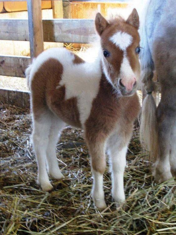 OMGosh. Look at that baby pony