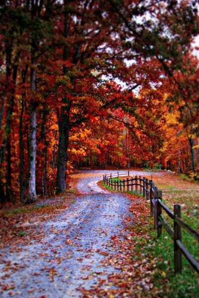Colors of Fall Ѽ Autumn ♥ ༻✿ڿڰۣ ♥ NYrockphotogirl ♥༻Country road:
