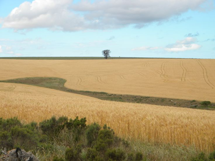 Inland - Caledon area; 1 hrs drive outside of Cape Town. This is where there are wheat fields and part of the Cape's country meander. #caledon #westerncape #countrymeander