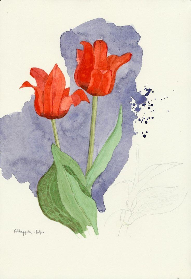 Aquarell Der Roten Tulpen Guidoh Rote Tulpen Wasserfarbenblumen