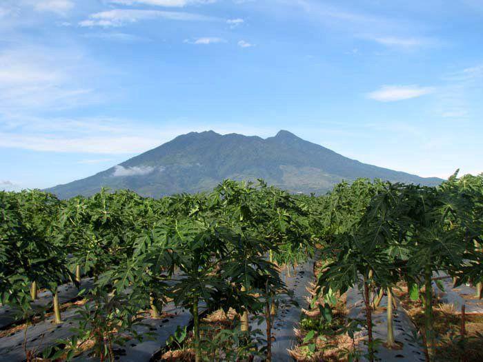 Hijaunya lereng G. Salak, Bogor