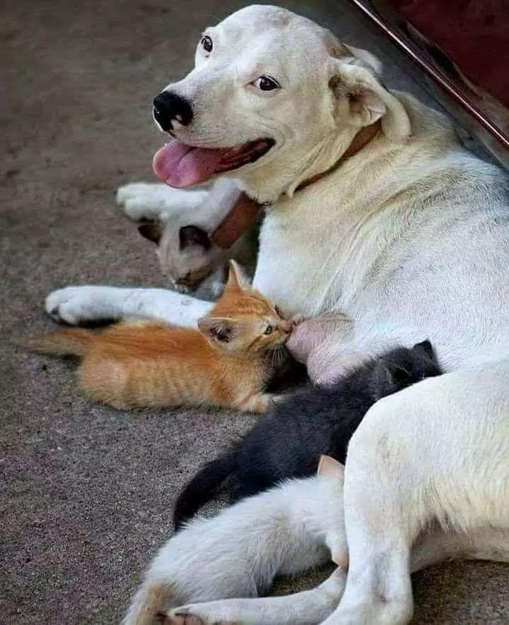 Newborn Kittens By Debbie Braumberger On Friends Animals