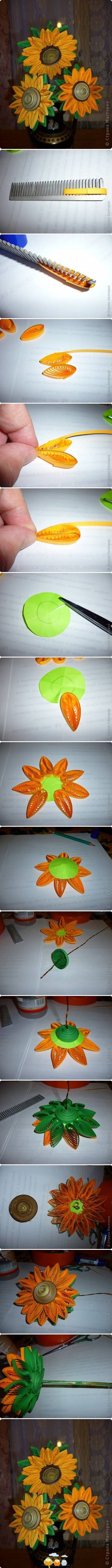 Sunflower quilling