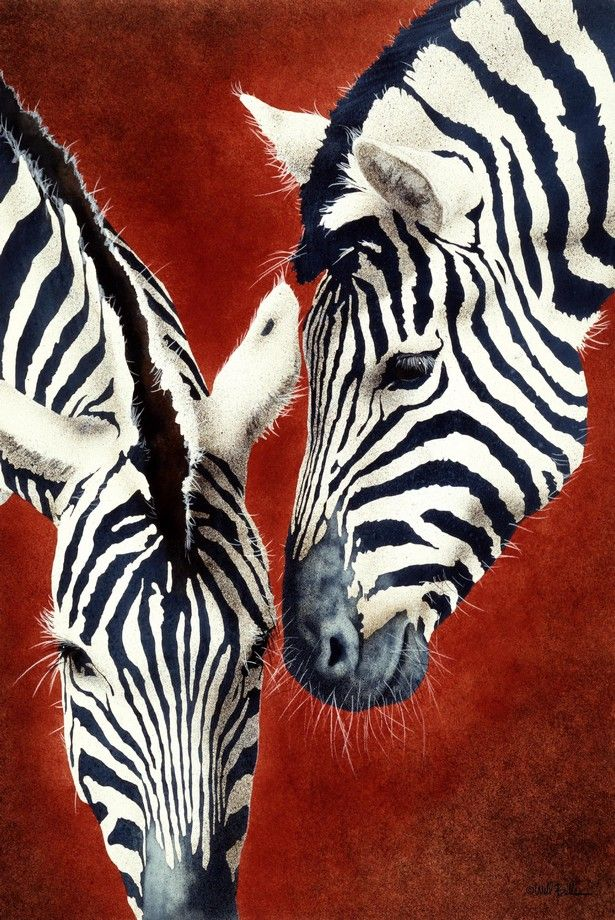 Home Decor Modern Zebra Paintings Art Bedroom Animal HD Print on Canvas