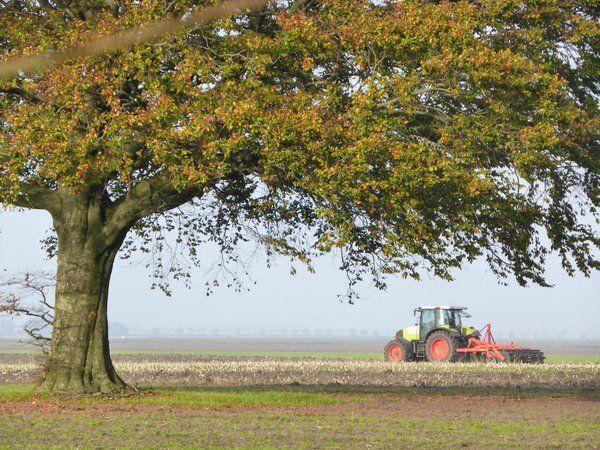 De boom en de boer #westerwolde