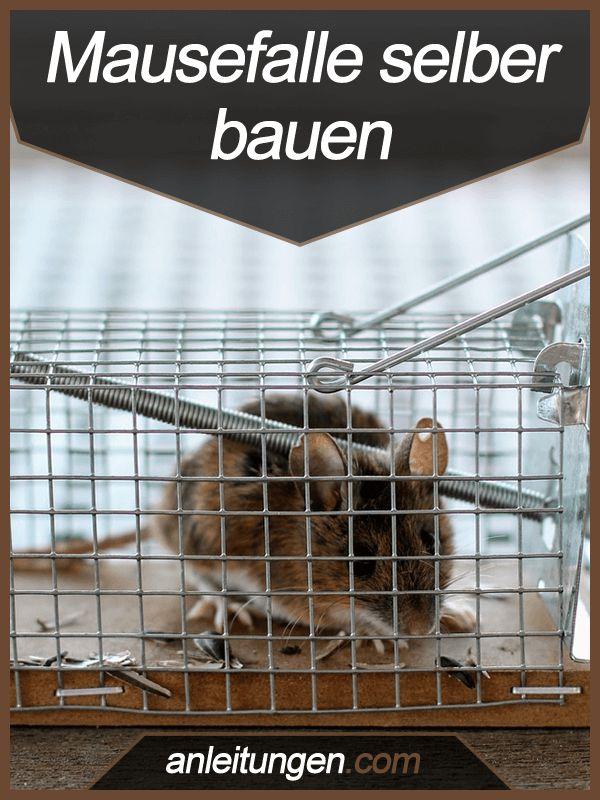 Mausefalle selber bauen - Du möchtest die Mäuse nicht töten, aber sie dennoch aus deinem Haus entfernen? Dann solltest du dir unbedingt diese Bauanleitung für eine Lebendfalle anschauen.