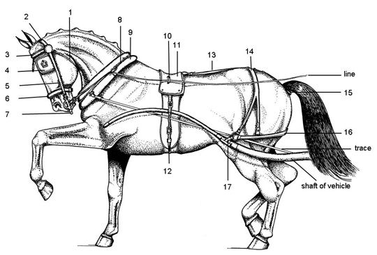 87 best horse test your knowledge images on pinterest
